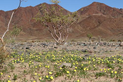 Aussenkehr Nature Reserve, Namibia