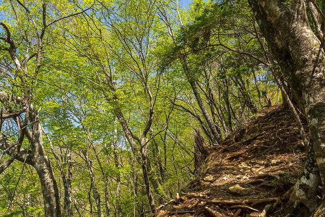 新緑の急斜面