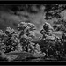 Garafía, Sony A7 IR, Nikkor 18mm/3.5