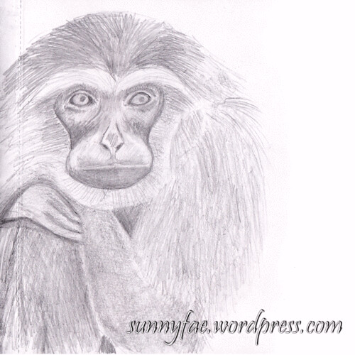 Gibbon-Pencil-Sketch