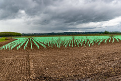 02-Jeunes plans de vigne - Photo of Landiras