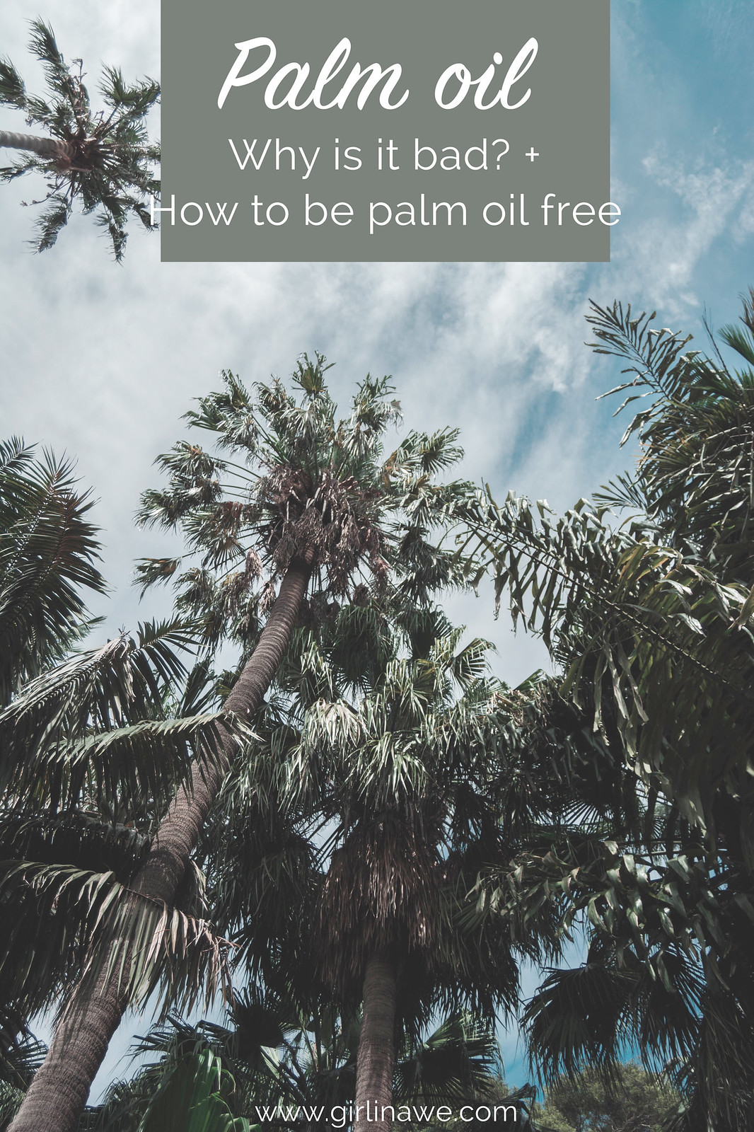 Palm Oil; why is it bad and how to live palm oil free