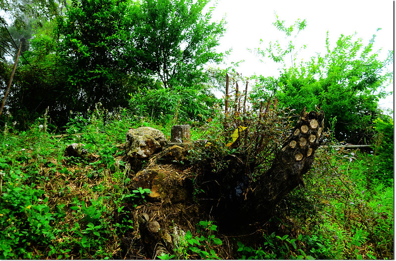 鳩州嶺山字森林三角點(Elev. 1073 m) 1