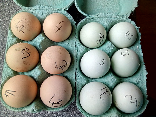 hatching eggs May 18
