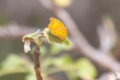 Madagascar 2018 - Camera II - 01415.jpg