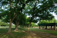 Pecans at the park
