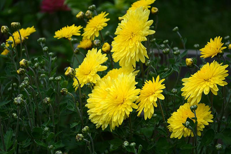 цветы дождь 25