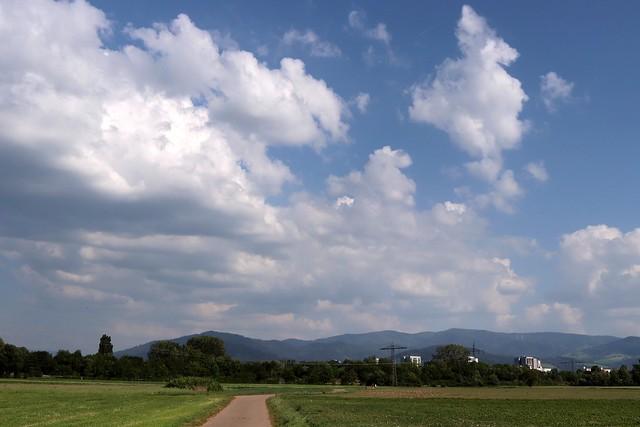 Dietenbach landscape IV