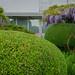 A peek into the garden ... :-) by frankmh