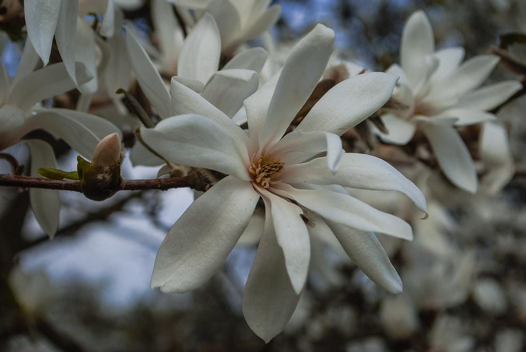 Весны творение!!!  10:27:38 DSC_7444