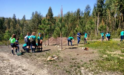 Plantação de árvores autóctones