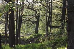 Folk music and birds in Slottsskogen
