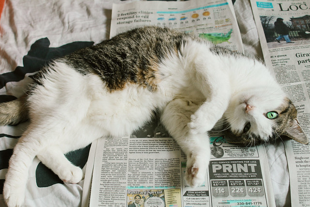 Cat rolling on newspaper