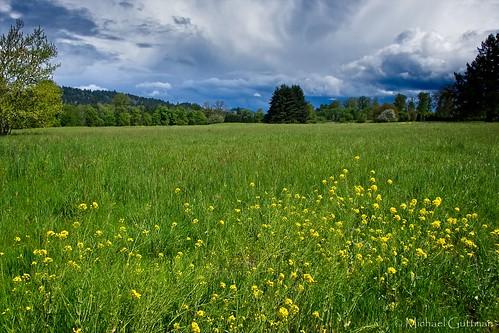 green field grass flowers weeds trees sky clouds sunshine springfield oregon spring fujifilm xt2
