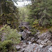 Birk of Aberfeldy Scotland