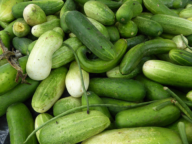 cucumbers are successfully grown ain prototype horticulture project in Vanuatu