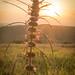 Sunset Flower by Gustavo Ferreiraa