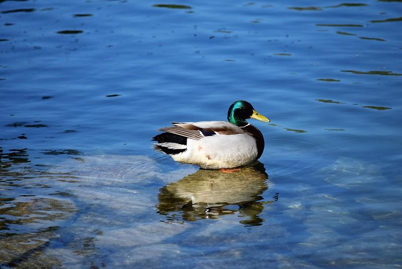 Ducks 24.05 (6)