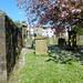 Irvine Old Parish Churchyard (247)