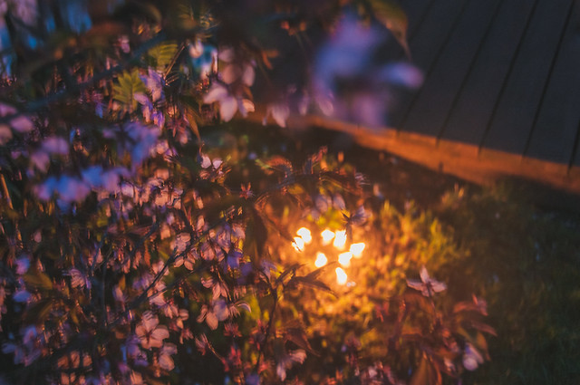 Cherry Flowers With Candle Light