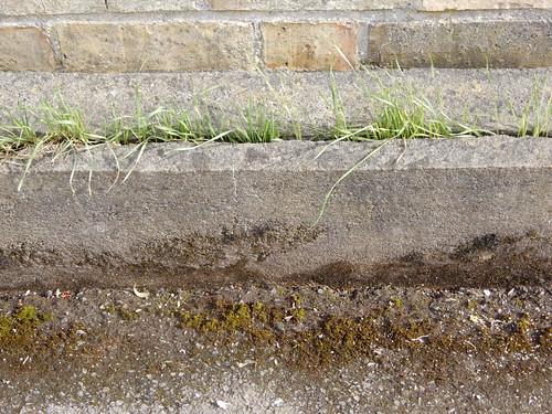 wheatgrass in a wall