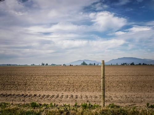 Samish Flats Fields-005