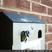 351 of Year 4 - Super soft rubbishy 365 of a Blue Tit leaving her nest in a cigarette bin