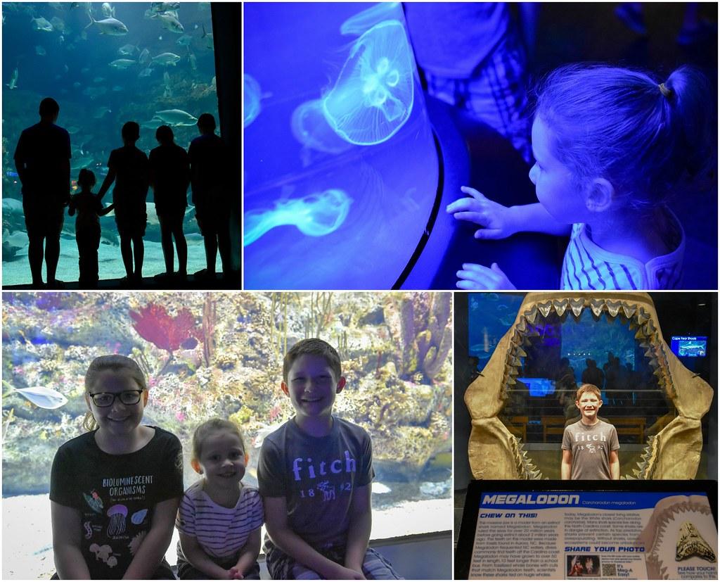 nc aquarium