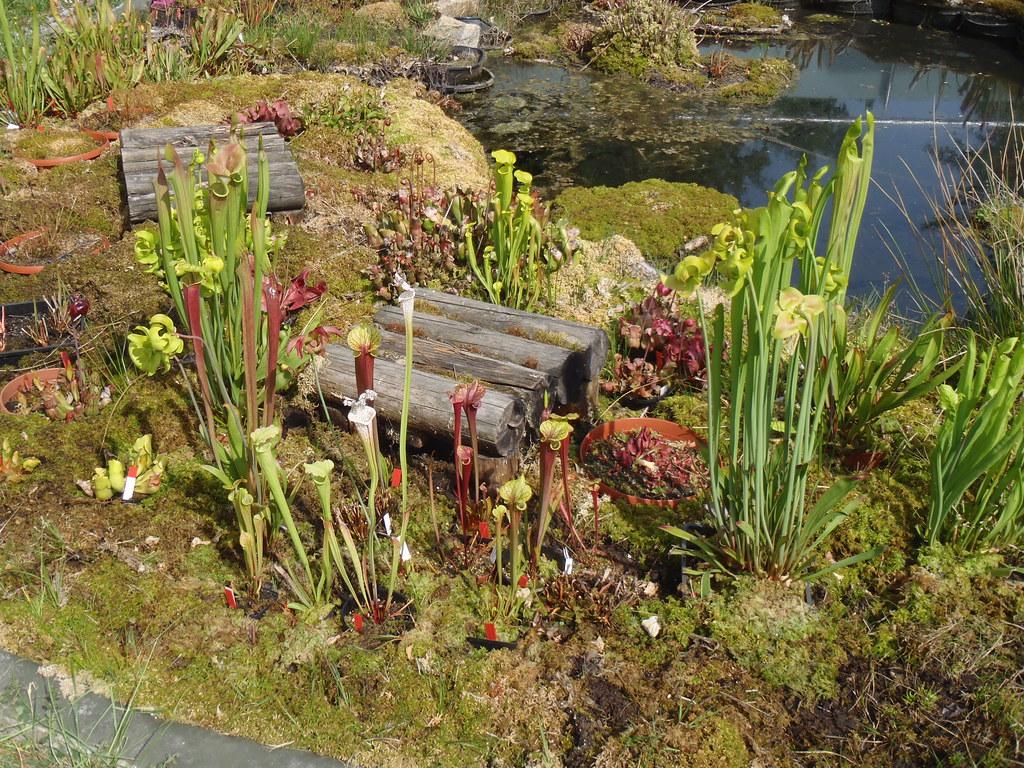 Sub arrangement in the bog