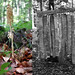 WALD-DIPTYCHON . FOREST-DIPTYCH