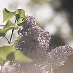 20180514-161758 - Spring Garden Bokeh