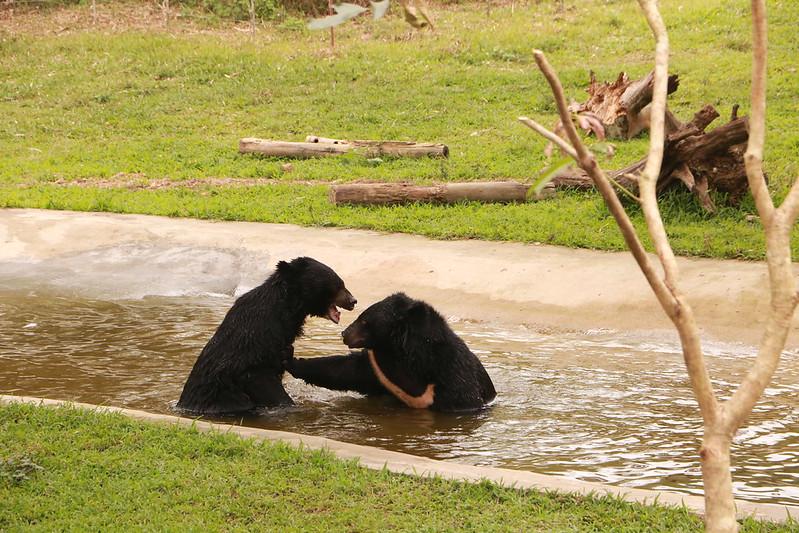 Popeye and Joe wrestle in the pool