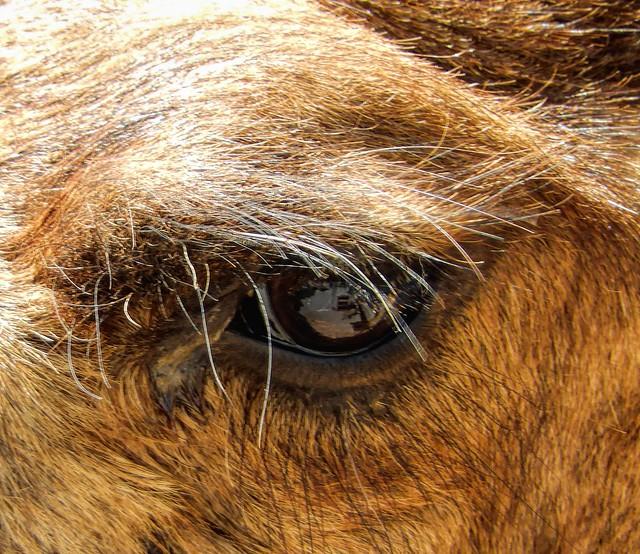 Eye of A Camel