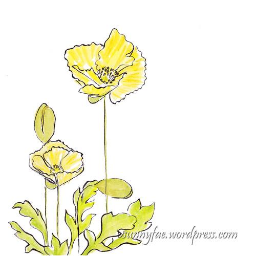 yellow poppy sketch 1