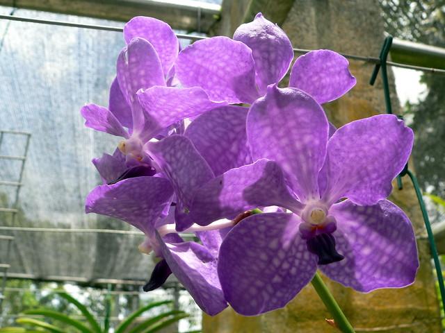 was kosten prostituierte die blühende orchidee