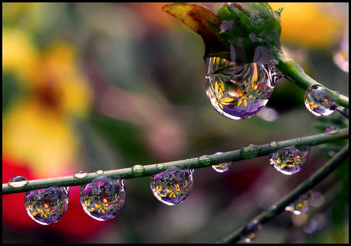 bouquet in a drop