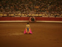 animal sports, event, tradition, sports, bullring, entertainment, matador, performance, bullfighting,