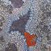 Multicolor Lichen (Detail)