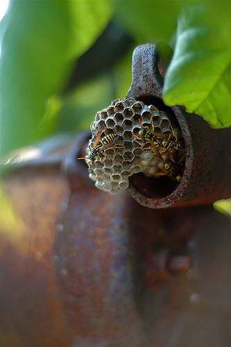 old house macro building texture metal closeup farmhouse 50mm rust d70 nest farm bees gas pump age meter gettman