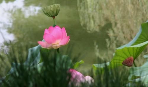 Japanese Garden, Lotusland