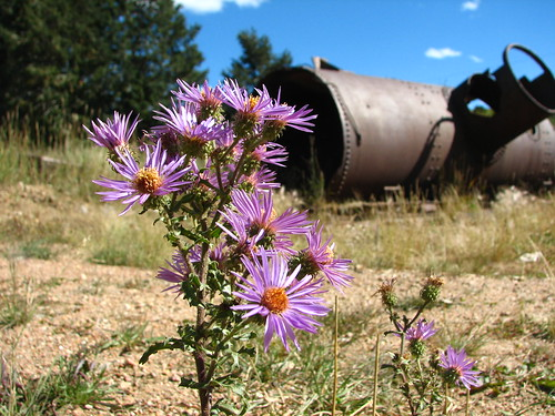 flower creek geotagged s2is cripplecreek shot137 image:Shot=137 camera:model=powershots2is address:Tag=cripplecreek event:Code=2006917 image:Roll=2069
