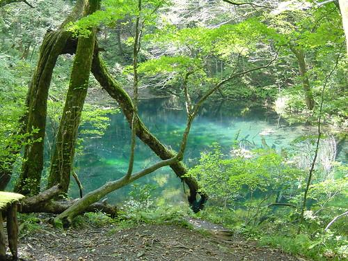 青く輝く池壷の池