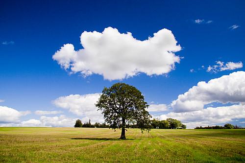 sky tree clouds canon landscape 1785mm markham 30d shahzad umar