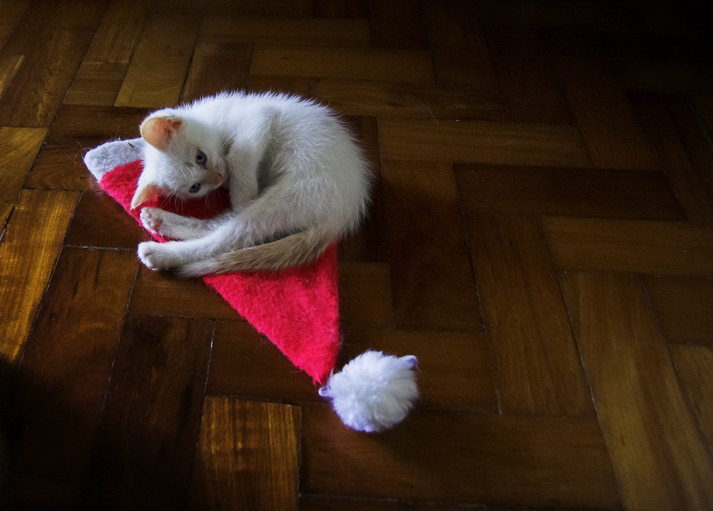 Papai Noel chegou cedo este ano [Santa Claws arrived early this year] by Jim Skea