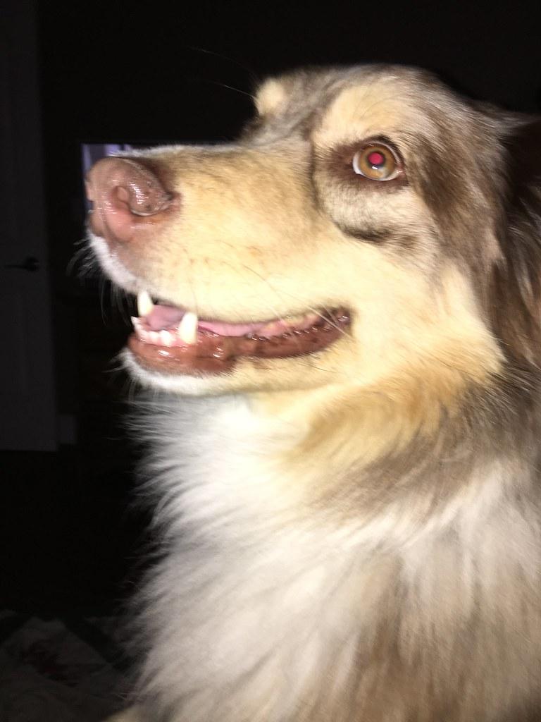 Pet Selfie - Muttley