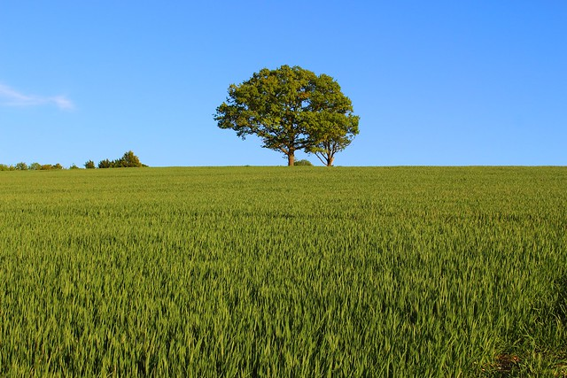 Hertfordshire
