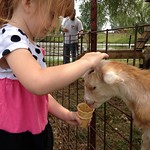 Mon, 08/18/2014 - 8:51am - Doughtry Orchard Petting Zoo