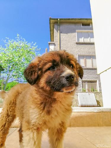 Cute litlle dog