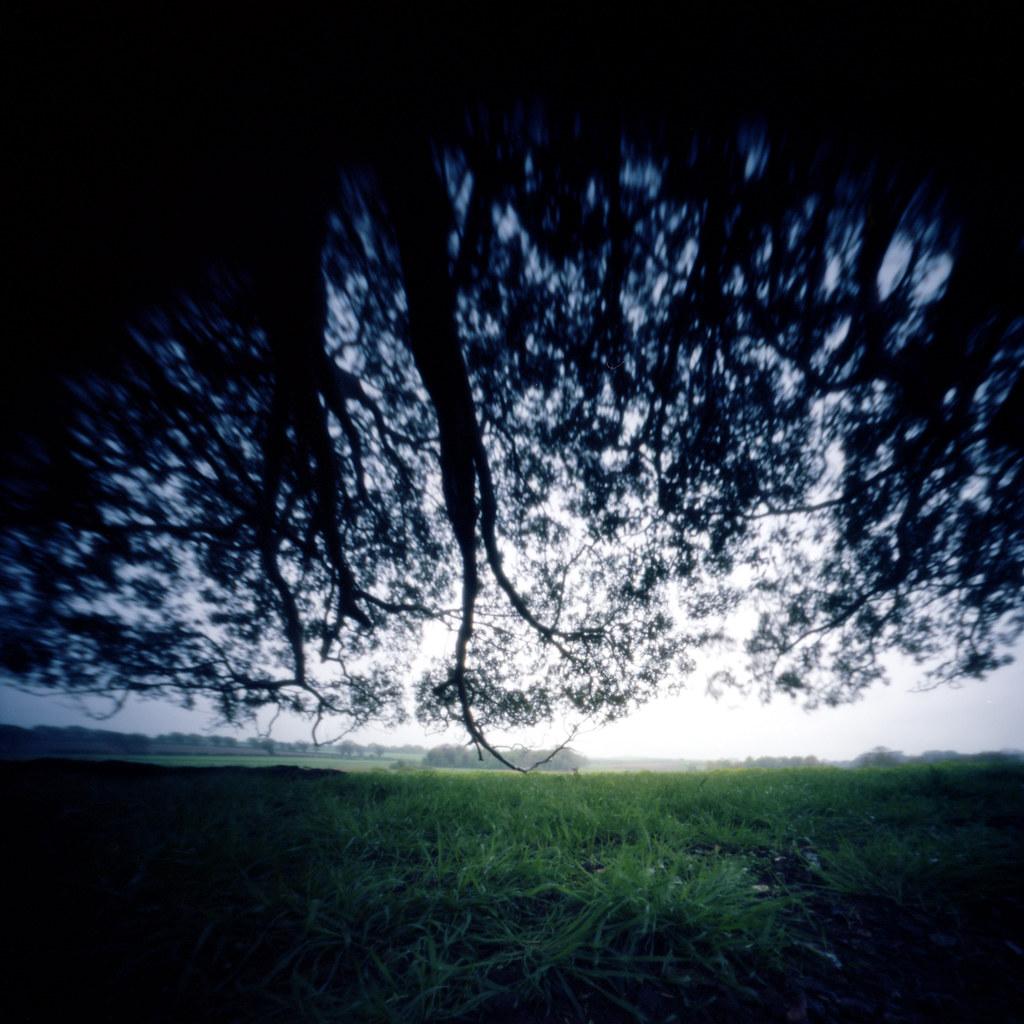 Warham Tree 2