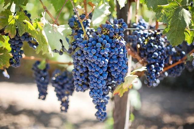 Rioja ultimate wine experience